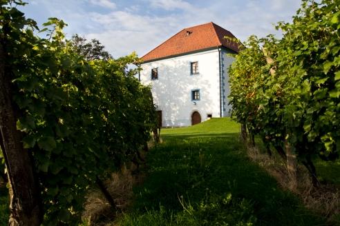 Stary winiarski dwór, dziś apartamenty z widokiem na winnice. Zlati Grič, Podravje.