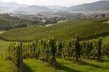 Styryjskie winnice Zlati Grič. Styria, Podravje.