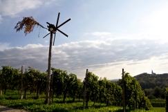 Klepotec strzeże winnicy pod Pohorjem. Styria, Podravje.
