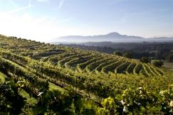 Winnice na Pohorju. Styria, Podravje.