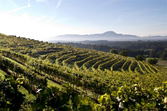 Winnice na Pohorju. Styrja, Podravje.