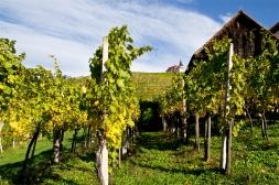 Styryjskie winnice, Podravje.