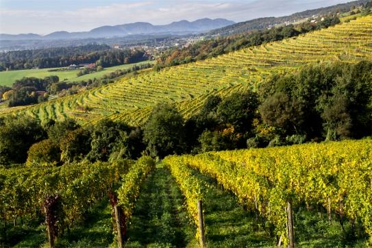 Jesień na Pohorju. Styria, Podravje.