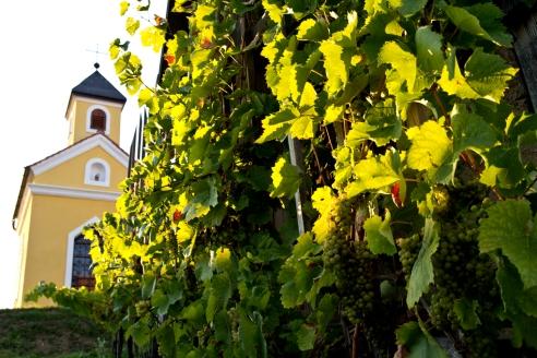 Winnica w regionie Kozjansko, Podravje.