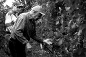 Rudi i Borut decydują, które owoce zbieramy w pierwszej kolejności