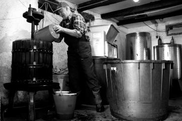 W winnicy Strnad wino robi się w tradycyjny sposób