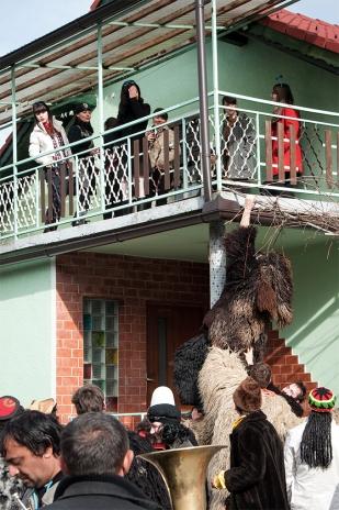 Niedźwiedź próbuje dostać się do panien