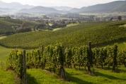 Winnice nad miejscowościa Slovenske Konjice