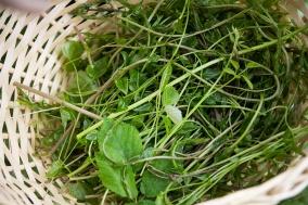 Dzikie szparagi i inne dary lasu na obiad