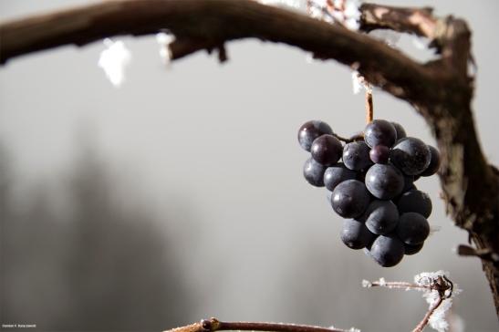zimowe-wino