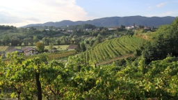 Słoneczna pogoda nad winnicami w Vogrsku