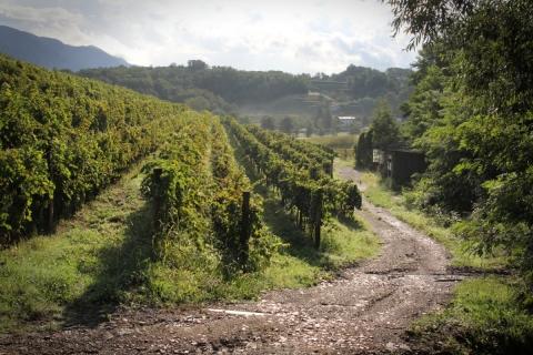 Winnica na Frlanovej kmetiji