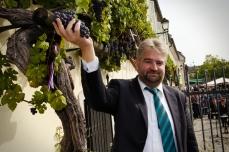 Pierwszą kiść w tym roku zerwał burmistrz Marburga
